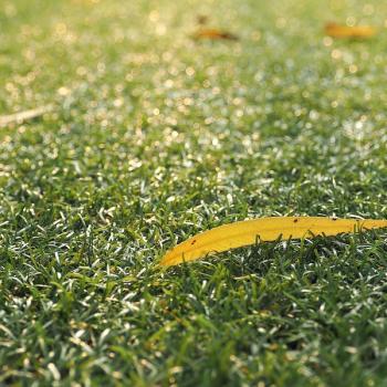 lawn with leaf